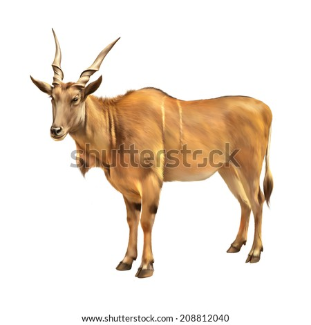 Common eland, The common eland (Taurotragus oryx), also known as the southern eland or eland antelope, is a savannah and plains antelope found in East and Southern Africa. - stock photo