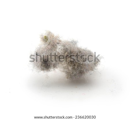 Common house hold dust, high magnification macro, isolated on white. - stock photo