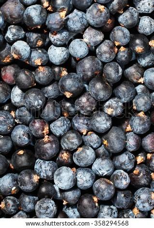 Common juniper berries Juniperus communis - stock photo