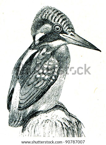 Common Kingfisher - Alcedo atthis - an illustration of the encyclopedia publishers Education, St. Petersburg, Russian Empire, 1896 - stock photo