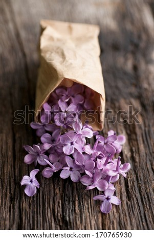 Common lilac flowers  - stock photo