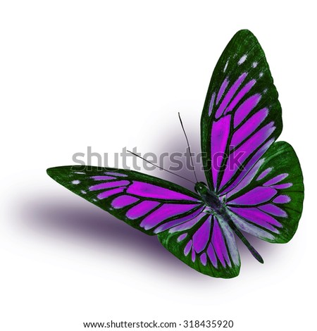 Common Wanderer (Pareronia anais) the beautiful flying purple butterfly on white background with soft shadow beneath - stock photo
