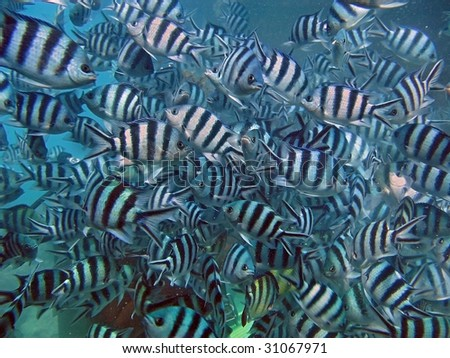Commotion of fishes - stock photo