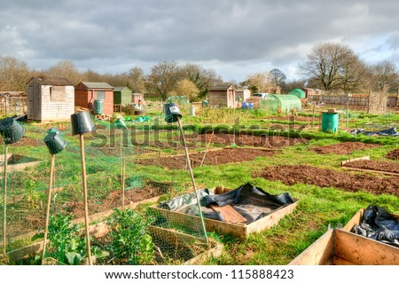 Communal allotments in Bristol, England.  Plots of land cultivated by the tenants for food production.