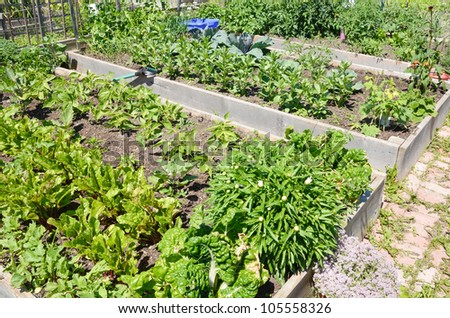 Community Allotment gardens in early summer