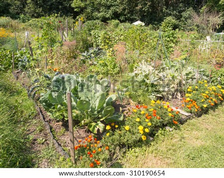 community allotment gardens in summer - stock photo