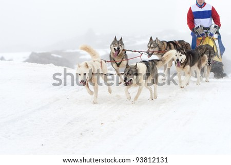 Competition sport of sled dog race on snow in winter.
