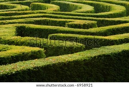 Complex hedge maze - stock photo
