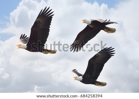 eagle position stock images royaltyfree images  vectors