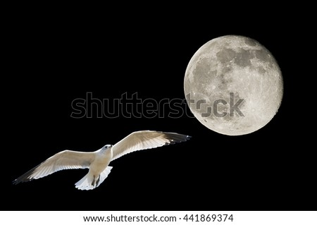 Composite of Full moon taken from the southeastern United States in october with seagull flying by