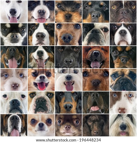 composite picture of head of dogs in studio