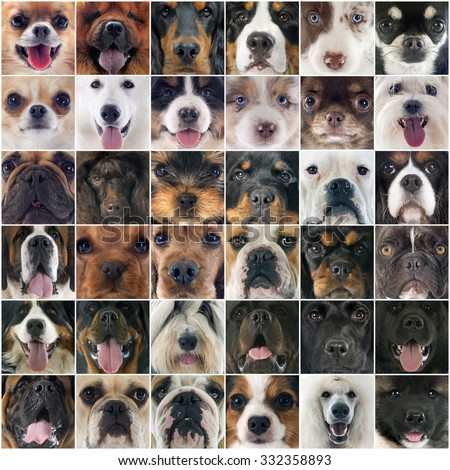 composite picture of purebred dogs and puppies