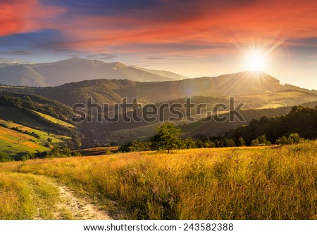 composite rural landscape. meadow path  on hillside with trees near the forest in high mountains in sunset light