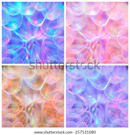 Composition - Colorful pastel background - Vivid color abstract dandelion flower - extreme closeup with soft focus, beautiful nature details - stock photo