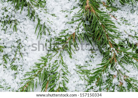 composition from fir twigs with snowflakes - stock photo