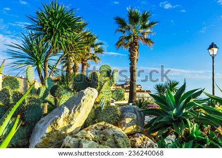 Composition is of the of plants in the city of Antibes, south of France - stock photo
