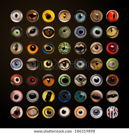 Composition of Animal eyes - stock photo