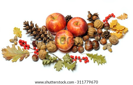 composition of autumn fruits - stock photo