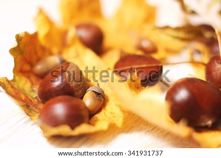 Composition of autumn leaves, acorns and chestnuts