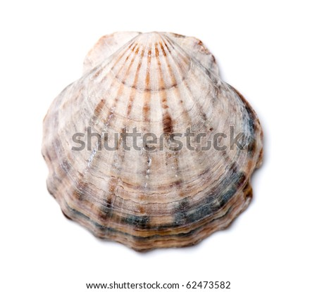 composition of exotic shells isolated on a white background close-ups