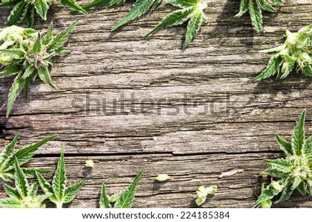 Composition of fresh marijuana plant bud with crystals and leaves on grunge wooden desk. View from above. Copy space. - stock photo