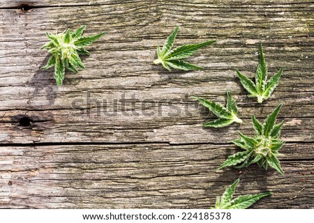 Composition of fresh small marijuana plant bud with crystals and leaves on grunge wooden desk. View from above. - stock photo