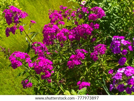 Composition of garden flowers
