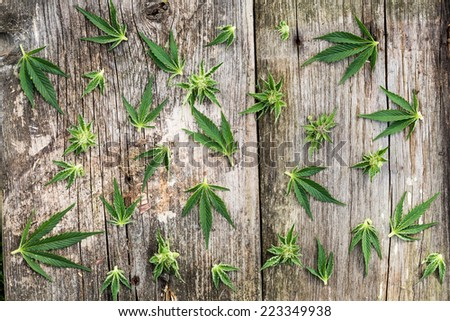 Composition of marijuana buds and leaves on the grunge wooden desk. View from above. - stock photo