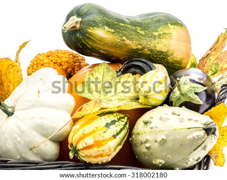 Composition of pumpkin, zucchini,summer squashes, and dead maple leaves on white background - stock photo