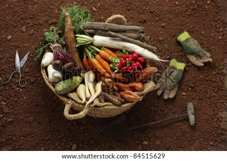 Composition with tubers: turnips, sweet potatoes, carrots, parsnips, salsifies and cassava - stock photo