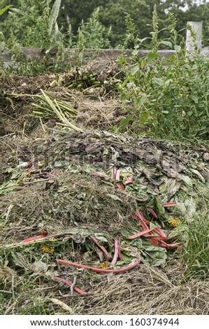 Compost bin early in September on a farm in northern Illinois - stock photo