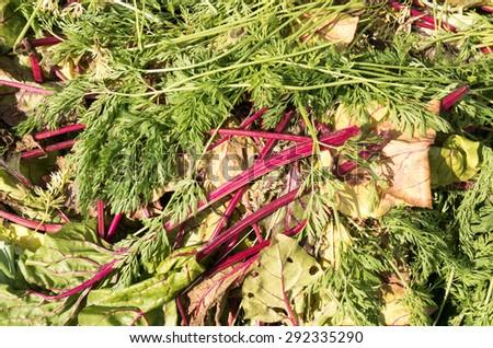 Compost heap with beet leaves in the organic vegetable garden De Groentenhof in Leidschendam, Netherlands. - stock photo