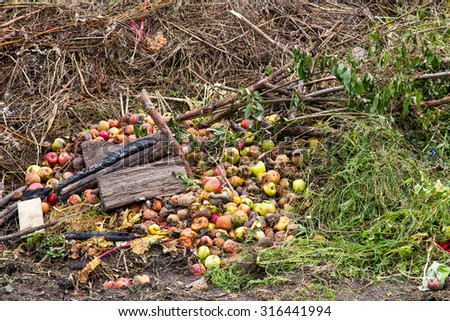 Compost heap with grass and apples on an allotment site - stock photo