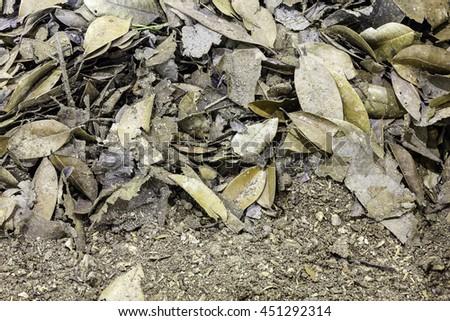 Compost soil Organic plant fertilizer for plantation - stock photo