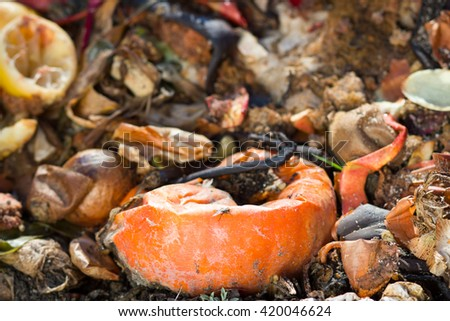 Compost wood bin in the huge / big garden; Composting pile of rotting kitchen fruits and vegetable scraps; ecology; biology (focus on fly on the pumpkin) - stock photo