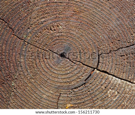 Concentric tree rings signifying the age of three, close-up