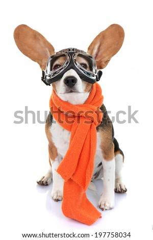 concept for travel holiday or vacation pet aviator - stock photo