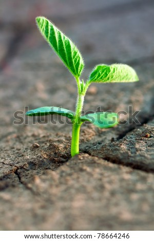 Concept new life. Rising sprig on dry ground. - stock photo
