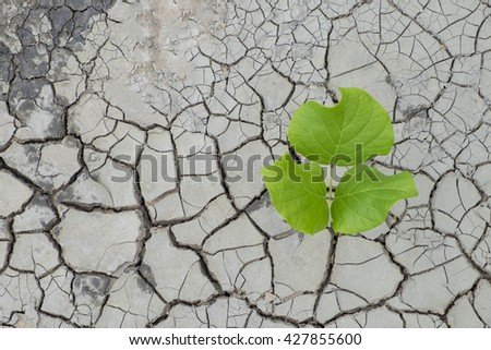 Concept new life. Rising sprout on dry ground.