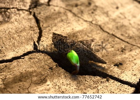 Concept new life. Rising sprout on dry ground. - stock photo