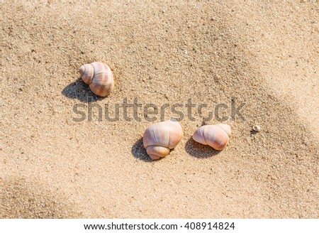 Concept of a beach holiday. Three seashells on the golden sand - stock photo
