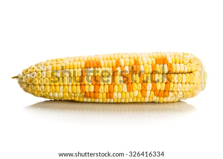 Concept of corn maize with GMO on corn seeds kernels. - stock photo
