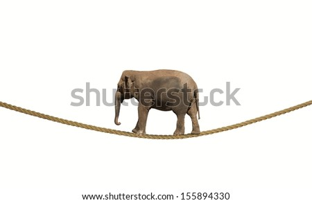 Concept of difficulty in business with elephant on a rope - stock photo