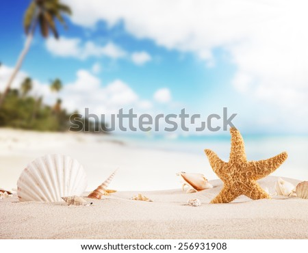 Concept of summer beach with starfish and shells. - stock photo
