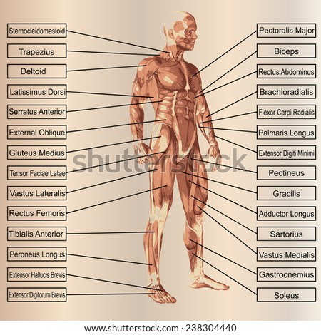 Concept or conceptual 3D human anatomy and muscle text on beige vintage background, metaphor to body, tendon, spine, fit, builder, strong, biological, skinless, shape, posture, health medical - stock photo