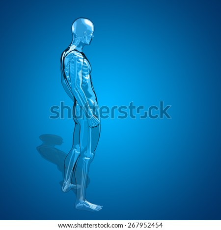 Concept or conceptual 3D human man or male skeleton anatomy transparent body over blue gradient background, metaphor to medical, health, science, biology, bone, joint, healthy, structure or healthcare - stock photo