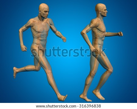 Concept or conceptual 3D human man or male skeleton anatomy transparent body over blue gradient background metaphor to medical, health, science, biology, bone, joint, healthy, structure or healthcare - stock photo