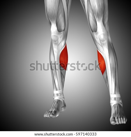 leg anatomy stock images, royalty-free images & vectors | shutterstock, Human Body