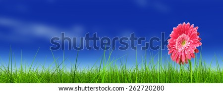 Concept or conceptual green fresh summer or spring grass field and a flower over a blue sky background, metaphor to nature, season, rural, farmland, outdoor, environment, pasture, growth conservation - stock photo