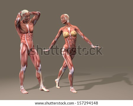Concept or conceptual human man and woman couple 3D anatomy body with muscle on brown background as metaphor to medicine,sport,male,muscular,medical,nude,female,male,health,physical,biology or fitness